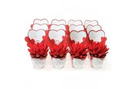 Echeveria miranda rosso velvet 949 in little love cachepot x12