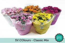 Chrysanthemum ind. misto classic in sv.colours busta
