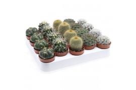 Cactus misto bolmix 108