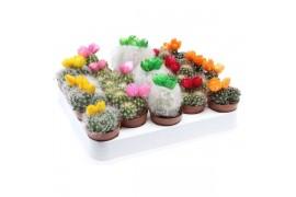 Cactus misto strobloem 180 decorato