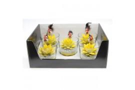 Echeveria miranda giallo in vetro + deco 993