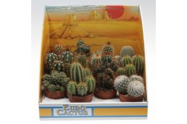 Cactus misto in scatola decorativa 1010 in scatola decorativa