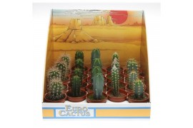 Cactus misto 1008 in scatola decorativa
