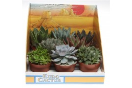 Succulenten misto 1025 in show scatola