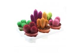 Cactus Altro