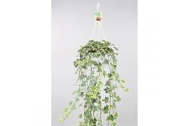 Hedera helix goldchild xxl in bianco vaso appeso